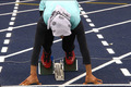 14 دونده گلستانی برای قهرمانی آسیا رکورد می زنند