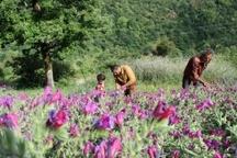 نمین کلکسیون گیاهان دارویی استان اردبیل