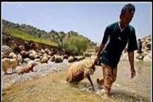 بارش باران بهاری عشایر شهرستان کوهرنگ  را غافلگیر کرد