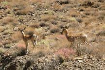 هفت قُرقگاه زیست محیطی در سمنان تعریف شد