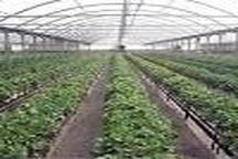 مدیریت بهینه در مصرف آب کشاورزی؛ از نقاط مثبت اجرای طرح اصلاح الگوی کشت