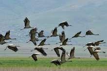 پیشگیری، مهمترین راه جلوگیری از شیوع آنفلوانزای پرندگان