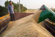 39 هزار تن گندم در قزوین خریداری شده است