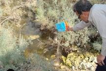 اجرای عملیات بیولوژیکی مبارزه با مالاریا در آبهای راکد دیر بوشهر