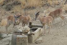 ۶گونه باارزش جانوری آذربایجان غربی در خطر انقراض قرار دارد