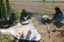 مشارکتجویی بیمهای بانوان روستایی شیروانی بالاتر از استان