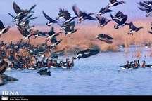 موردی از مرگ پرندگان در مناطق زیستگاهی آذربایجان غربی مشاهده نشد