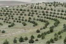 اجرای 11 طرح آبخیز داری در اردبیل در سال جاری