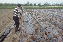 ابراز نگرانی کشاورزان جویباری از کمبود آب در اراضی شالیزاری