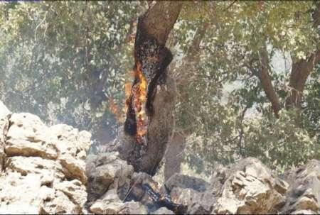 مهار آتش سوزی جنگل های اندیمشک