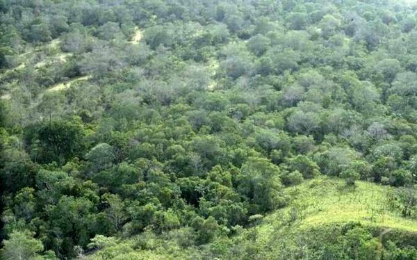 جنگل کاری می تواند کمک کار حفظ سفره های زیرزمینی باشد