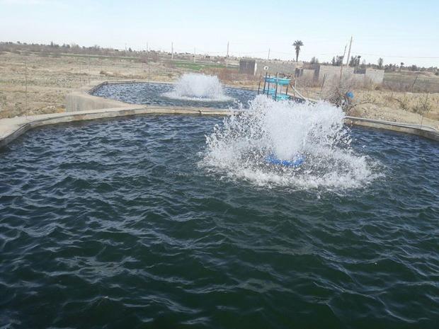123 تن ماهی سرد آبی از استخرهای پرورش ماهی برداشت شد