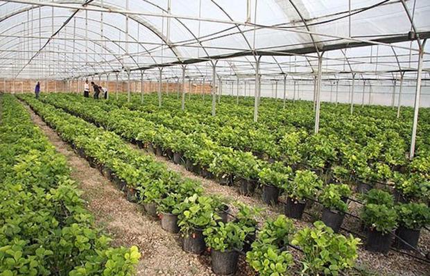 4 هزار تُن محصولات گلخانه ای در کردستان تولید شد