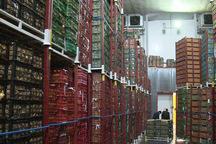 304 تن میوه عید نوروز در سردخانه های قزوین ذخیره سازی شد
