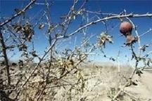خسارت ۷۵۸ میلیارد تومانی بهار امسال به بخش کشاورزی آذربایجانغربی