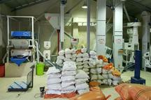 کارخانههای شالیکوبی گیلان استانداردسازی میشوند
