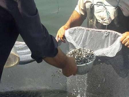 رهاسازی افزون بر 180 میلیون بچه ماهی در گیلان