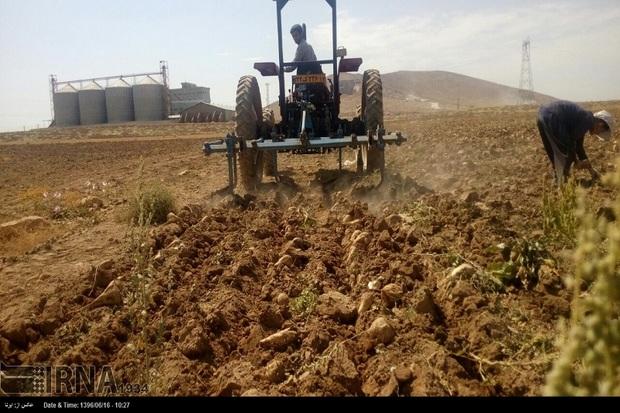 کاشت چغندرقند در مهاباد 18درصد کاهش یافت