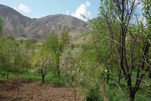 2 هزار میلیارد ریال به بخش کشاورزی ابهر خسارت وارد شد