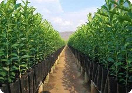 حدود 200 هزار اصله نهال شناسه دار در خراسان شمالی تولید شد