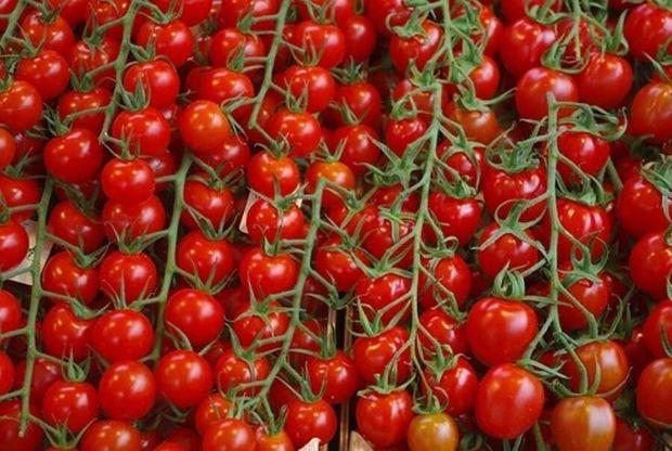 صدر نشینی گوجهفرنگی در جدول قیمتها پایان مییابد