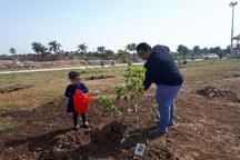 توزیع 30 هزار اصل نهال رایگان در هفته درختکاری در آبادان
