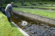 ضرورت توسعه آبزی پروری  برای افزایش درآمد خانوارها و ارزآوری