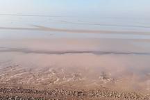 بخشی از ساحل هندیجان به نفت آلوده شد