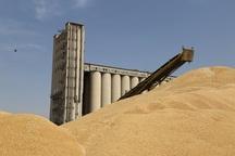 خوزستان ذخیره گاه اصلی گندم کشور باقی می ماند