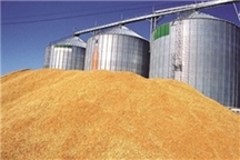 450 میلیارد ریال به گندم کاران ایلام پرداخت شد