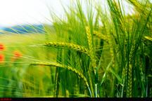 افتتاح 70 پروژه کشاورزی در استان زنجان همزمان با هفته دولت