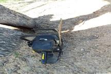 متخلف قطع درختان جنگلی در کهگیلویه و بویراحمد دستگیر شد