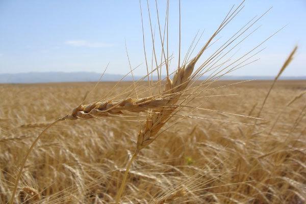 34 روستای استان یزد مشمول پرداخت زکات هستند
