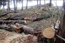 تهدید باغ های الموت با حضور سوداگران چوب