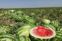برداشت بیش از 30 هزار تن هندوانه از مزارع پلدشت