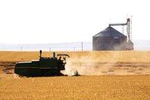 نرخ برداشت محصول پائیزه گلستان اعلام شد