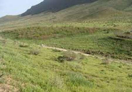 264 هزار تن علوفه در مراتع گچساران تولید شد