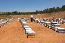 آمارگیری از کلنیهای زنبور عسل قزوین در حال اجراست
