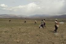 عملیات بذرپاشی در 1110 هکتار از مراتع کردستان انجام شد