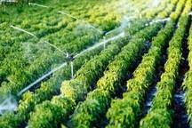 طرح آبیاری نوین در هزار و 950 هکتار مزارع سبزوار اجرا شد