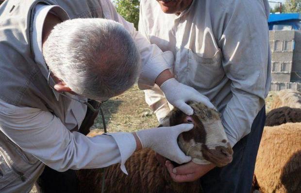 آمادگی اکیپ های بازرسی دامپزشکی صومعه سرا برای مراسم عید قربان