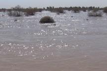 حدود 30 درصد جازموریان حوزه سیستان وبلوچستان آبگیری شده است