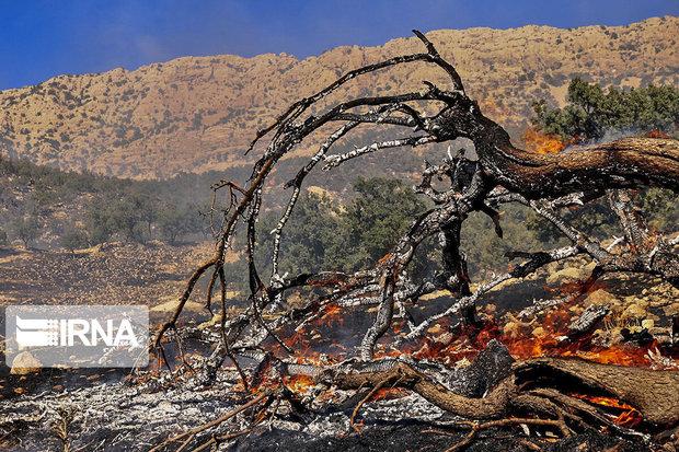 ۴۵ هکتار از منابع طبیعی سمنان در آتش سهل انگاری انسان سوخت
