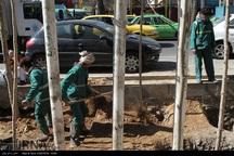 1100 اصله درخت چنار در خیابان ولیعصر(عج) پایتخت کاشته می شود