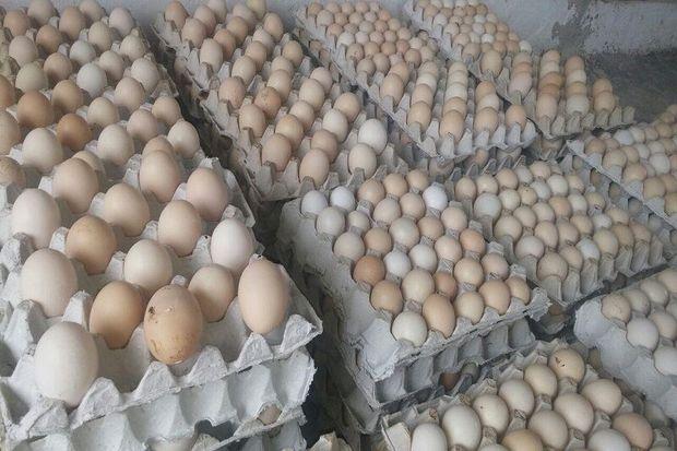 ۲۰ تن تخم مرغ وارداتی فاسد در رباط کریم معدوم شد