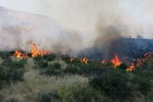 آتش سوزی پارک ملی گلستان عمدتا در عرصه های مرتعی است
