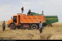 تولید گندم با وجود کاهش 200میلمتری باران درکهگیلویه وبویراحمدافزایش یافت