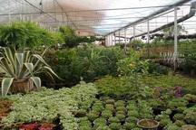 100 شرکت برای نمایشگاه ملی گل و گیاه محلات ثبت نام کردند