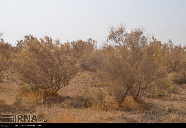 27میلیون هکتار از اراضی کشور تحت تاثیر فرسایش بادی است