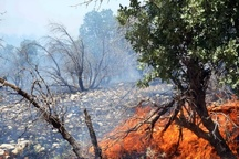 لزوم اعلام حالت فوق العاده در پی آتش سوزی در زاگرس  بروز بزرگترین آتش سوزی تاریخ زاگرس در صورت عدم مهار آتش
